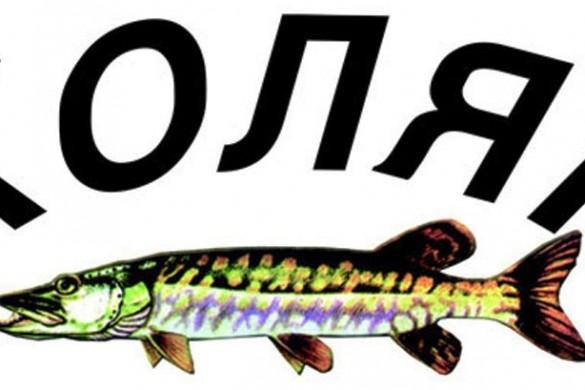 16-Ribare