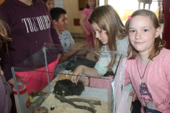 Отримана промоция природних наукох у керестурскей Школи